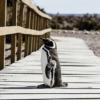 パンダ・ペンギンアップデートを徹底解説!ユーザー目線のSEO対策でアクセスアップ!